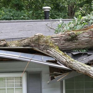 TREES TO CLOSE TO HOUSE