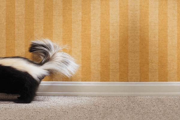 Diffusion D'odeur Logement Et Condo