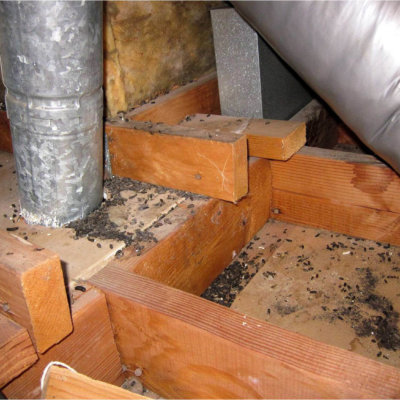 Signs of rodents and insects in the attic