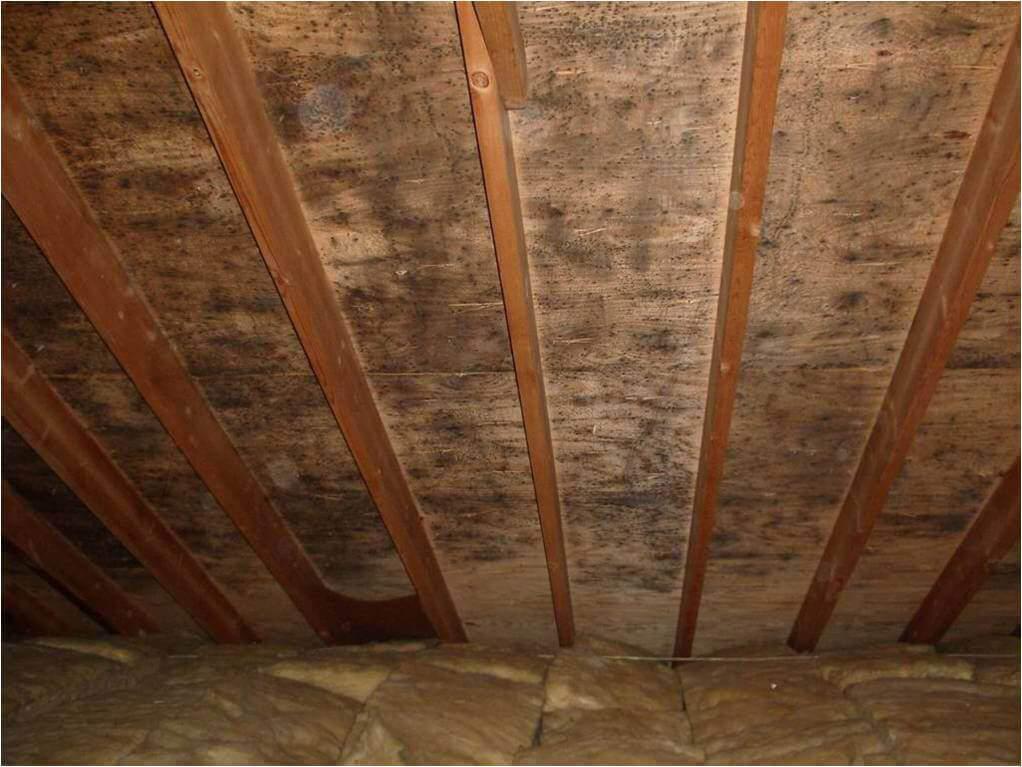 Mold in the attic
